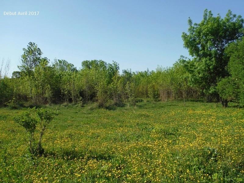 JdB de 4 hectares de pâtures dans le SUD : Avril 2019, et toujours la sécheresse... - Page 4 13009p10