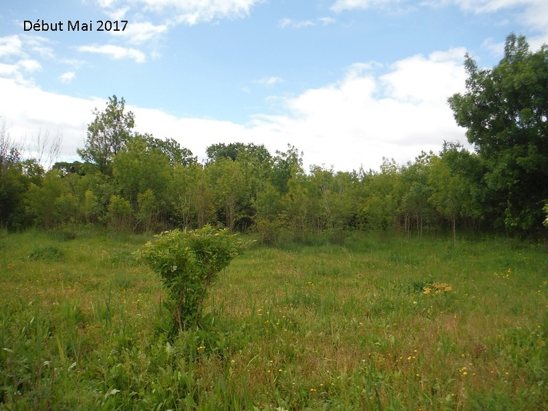 JdB de 4 hectares de pâtures dans le SUD : Avril 2019, et toujours la sécheresse... - Page 4 13010p10