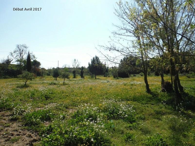 JdB de 4 hectares de pâtures dans le SUD : Avril 2019, et toujours la sécheresse... - Page 4 14009p10