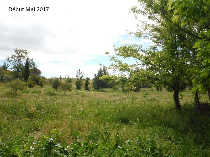 JdB de 4 hectares de pâtures dans le SUD : Avril 2019, et toujours la sécheresse... - Page 4 14010p10