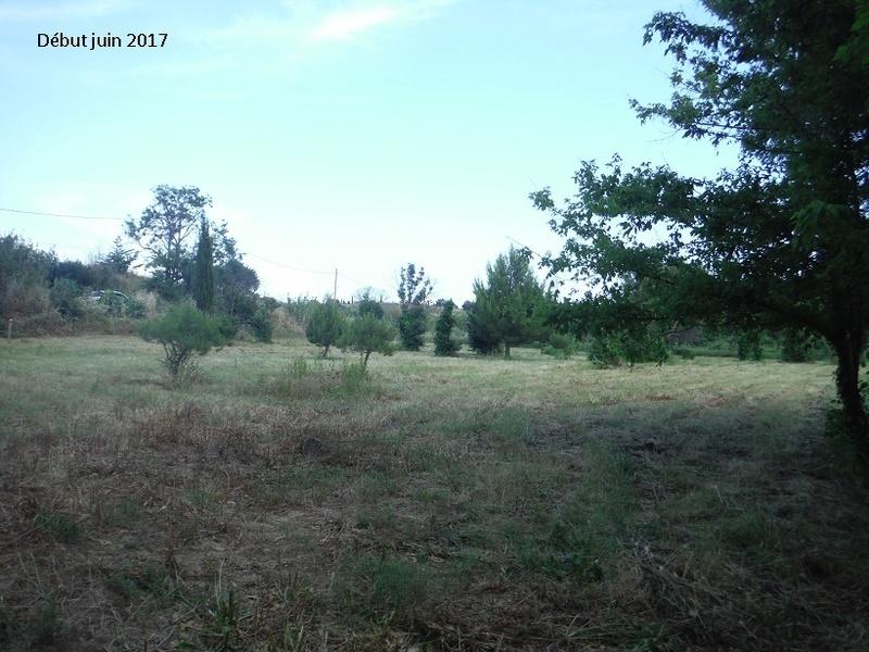 JdB de 4 hectares de pâtures dans le SUD : Avril 2019, et toujours la sécheresse... - Page 5 14011p10