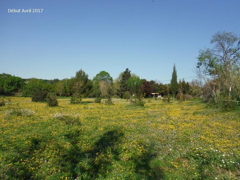 JdB de 4 hectares de pâtures dans le SUD : Avril 2019, et toujours la sécheresse... - Page 4 15009p10