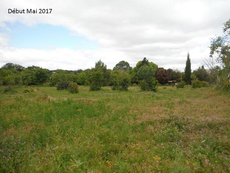 JdB de 4 hectares de pâtures dans le SUD : Avril 2019, et toujours la sécheresse... - Page 4 15010p10