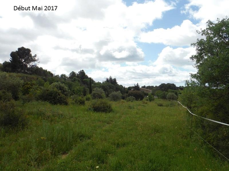 JdB de 4 hectares de pâtures dans le SUD : Avril 2019, et toujours la sécheresse... - Page 4 2010pa10