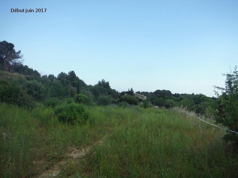 JdB de 4 hectares de pâtures dans le SUD : Avril 2019, et toujours la sécheresse... - Page 4 2011pa10