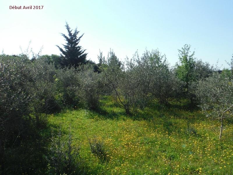 JdB de 4 hectares de pâtures dans le SUD : Avril 2019, et toujours la sécheresse... - Page 4 3009pa10