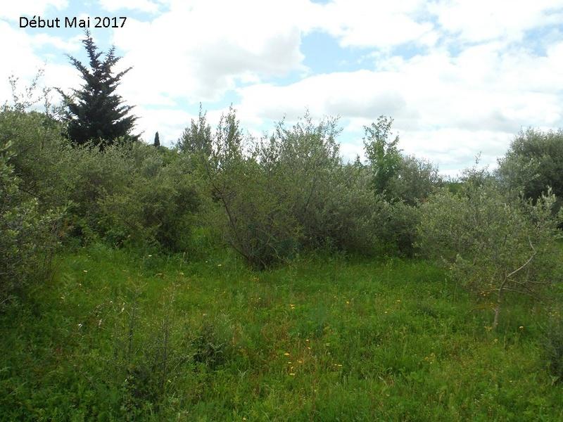 JdB de 4 hectares de pâtures dans le SUD : Avril 2019, et toujours la sécheresse... - Page 4 3010pa10