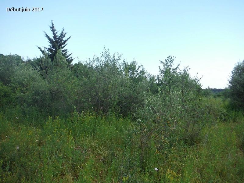 JdB de 4 hectares de pâtures dans le SUD : Avril 2019, et toujours la sécheresse... - Page 4 3011pa10