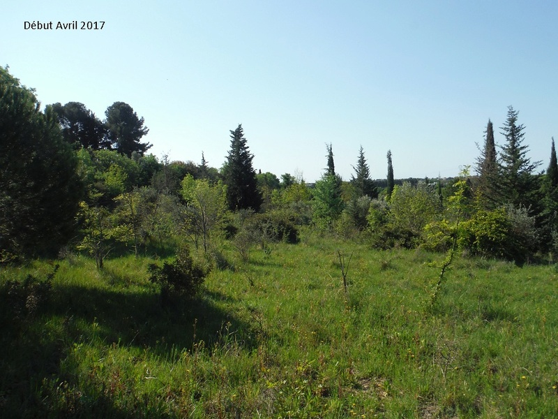 JdB de 4 hectares de pâtures dans le SUD : Avril 2019, et toujours la sécheresse... - Page 4 5009pa10