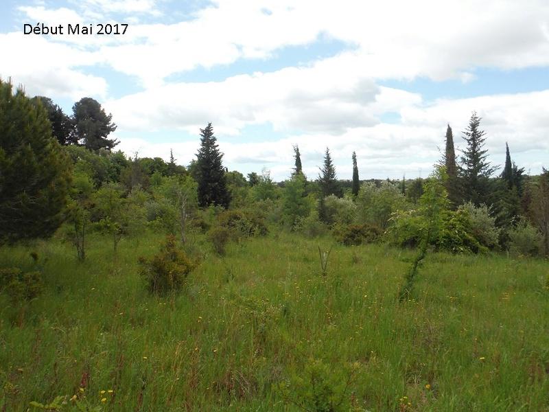 JdB de 4 hectares de pâtures dans le SUD : Avril 2019, et toujours la sécheresse... - Page 4 5010pa10