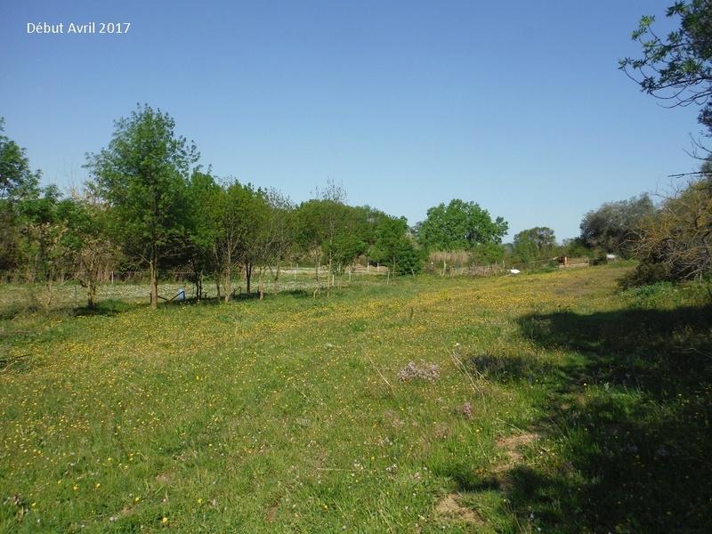 JdB de 4 hectares de pâtures dans le SUD : Avril 2019, et toujours la sécheresse... - Page 4 6009pa10