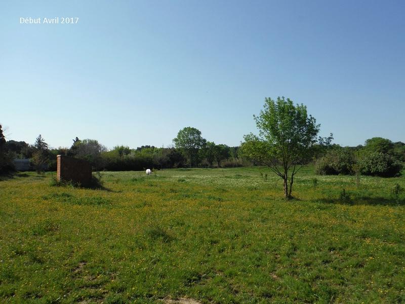 JdB de 4 hectares de pâtures dans le SUD : Avril 2019, et toujours la sécheresse... - Page 4 7009pa10