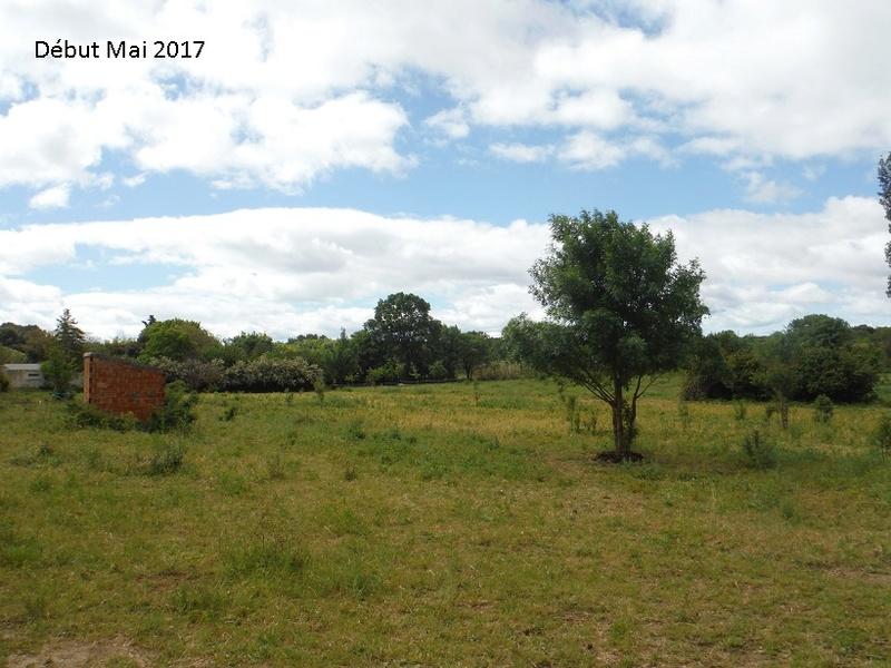 JdB de 4 hectares de pâtures dans le SUD : Avril 2019, et toujours la sécheresse... - Page 4 7010pa10