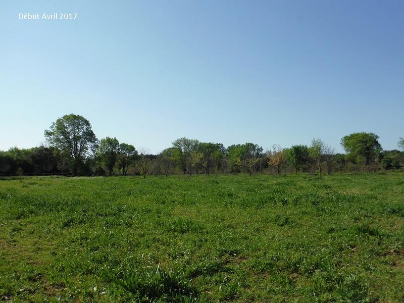 JdB de 4 hectares de pâtures dans le SUD : Avril 2019, et toujours la sécheresse... - Page 4 8009pa10