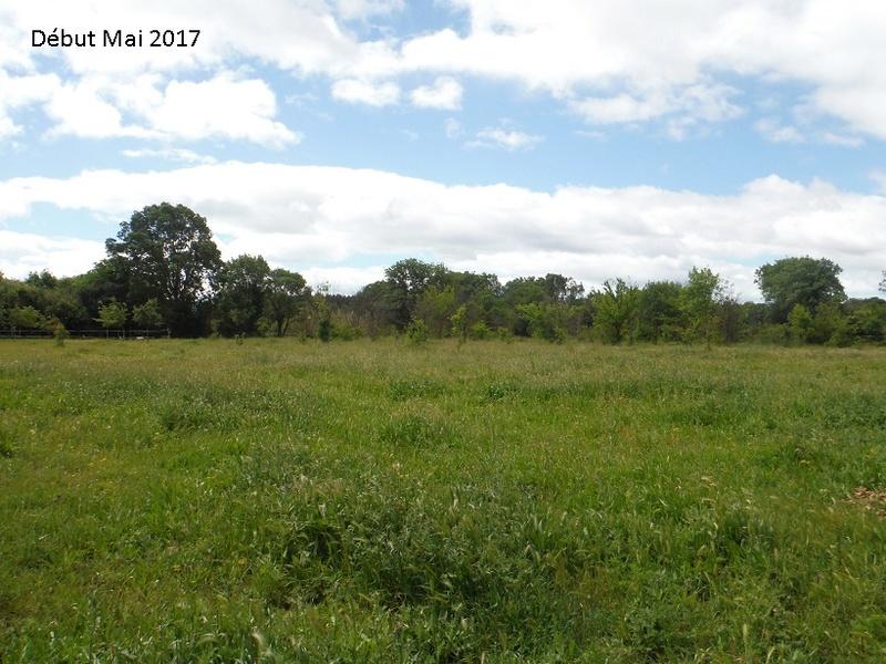 JdB de 4 hectares de pâtures dans le SUD : Avril 2019, et toujours la sécheresse... - Page 4 8010pa10