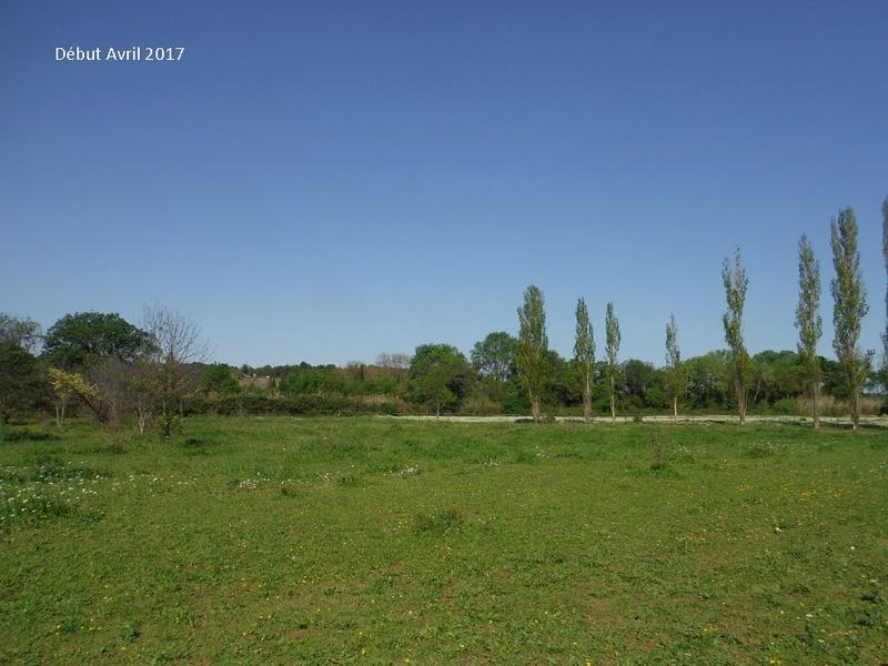 JdB de 4 hectares de pâtures dans le SUD : Avril 2019, et toujours la sécheresse... - Page 4 9009pa10