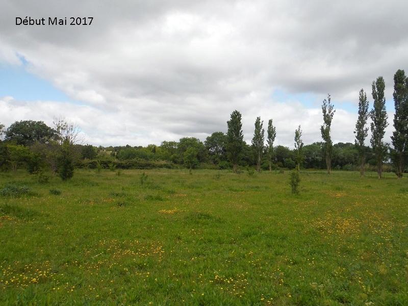 JdB de 4 hectares de pâtures dans le SUD : Avril 2019, et toujours la sécheresse... - Page 4 9010pa10