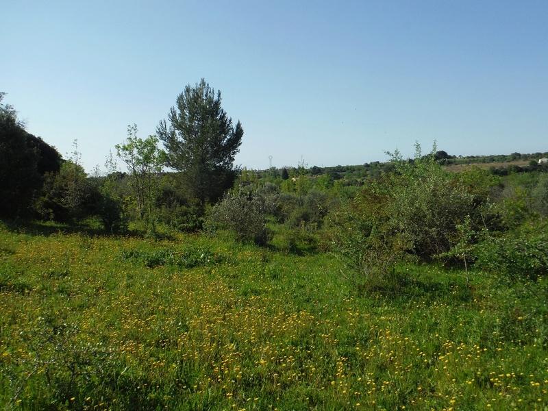 JdB de 4 hectares de pâtures dans le SUD : Avril 2019, et toujours la sécheresse... - Page 4 Dscf7022