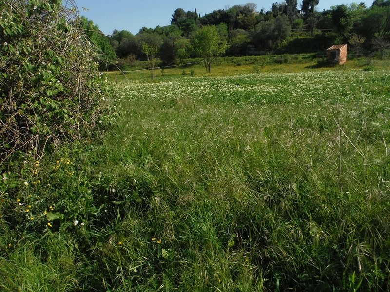 JdB de 4 hectares de pâtures dans le SUD : Avril 2019, et toujours la sécheresse... - Page 4 Dscf7023