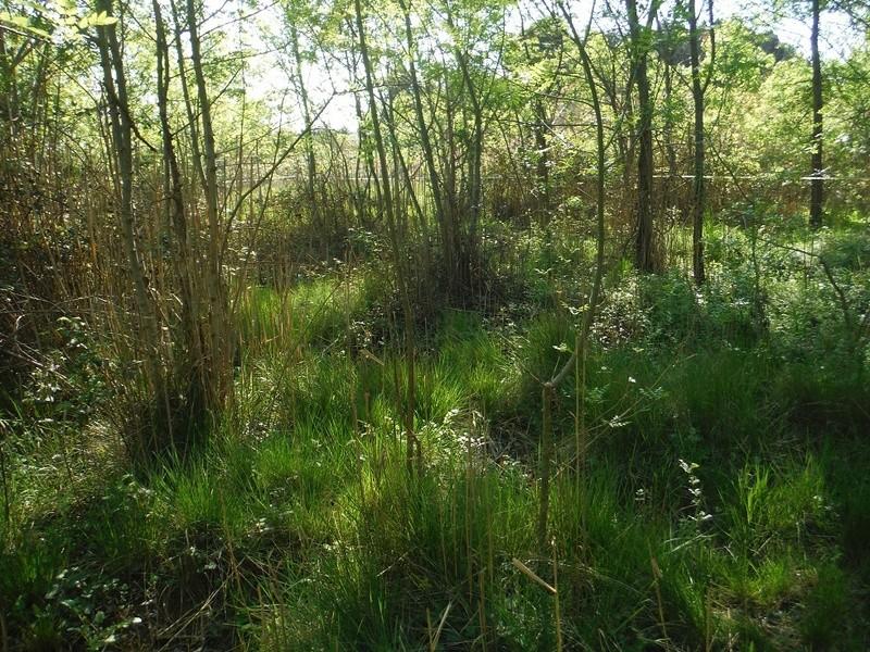 JdB de 4 hectares de pâtures dans le SUD : Avril 2019, et toujours la sécheresse... - Page 4 Dscf7113