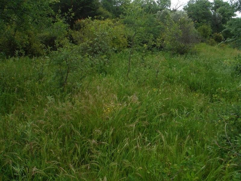 JdB de 4 hectares de pâtures dans le SUD : Avril 2019, et toujours la sécheresse... - Page 4 Dscf7712