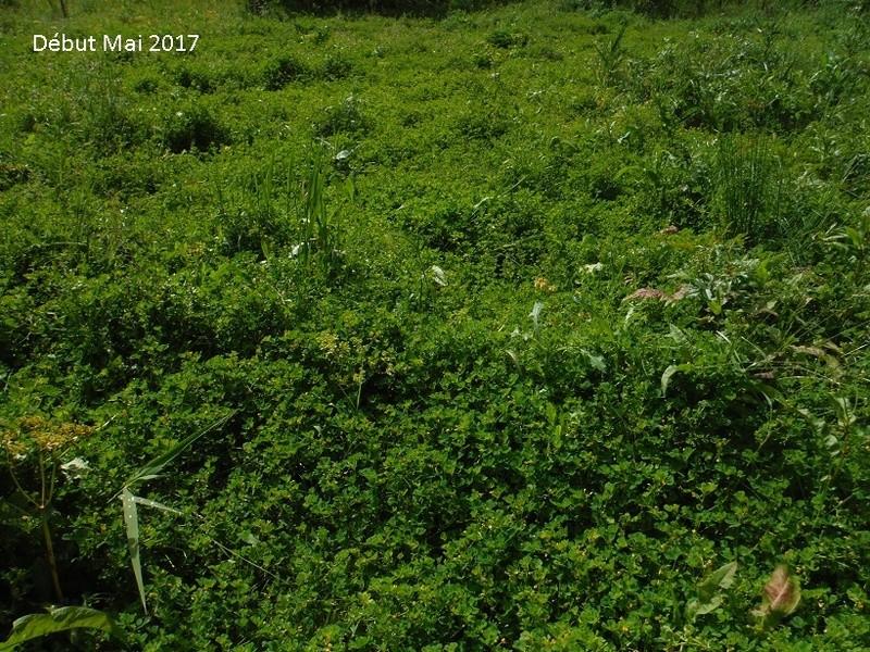 JdB de 4 hectares de pâtures dans le SUD : Avril 2019, et toujours la sécheresse... - Page 4 Dscf7713