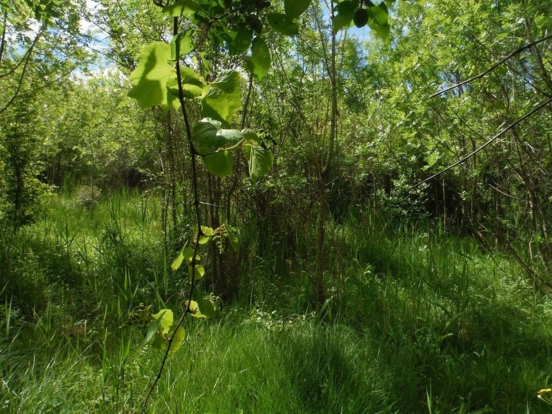 JdB de 4 hectares de pâtures dans le SUD : Avril 2019, et toujours la sécheresse... - Page 4 Dscf7714