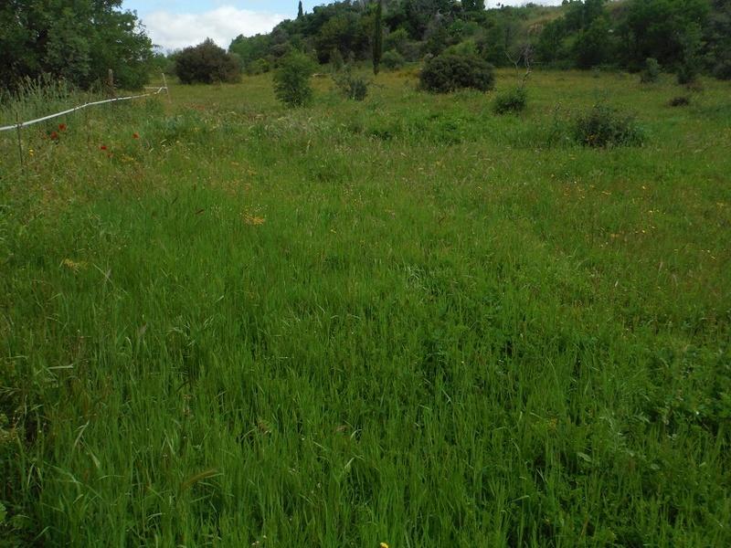 JdB de 4 hectares de pâtures dans le SUD : Avril 2019, et toujours la sécheresse... - Page 4 Dscf7716