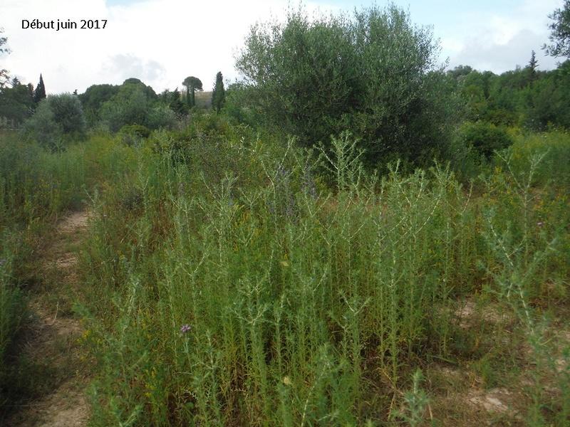 JdB de 4 hectares de pâtures dans le SUD : Avril 2019, et toujours la sécheresse... - Page 4 Dscf8215