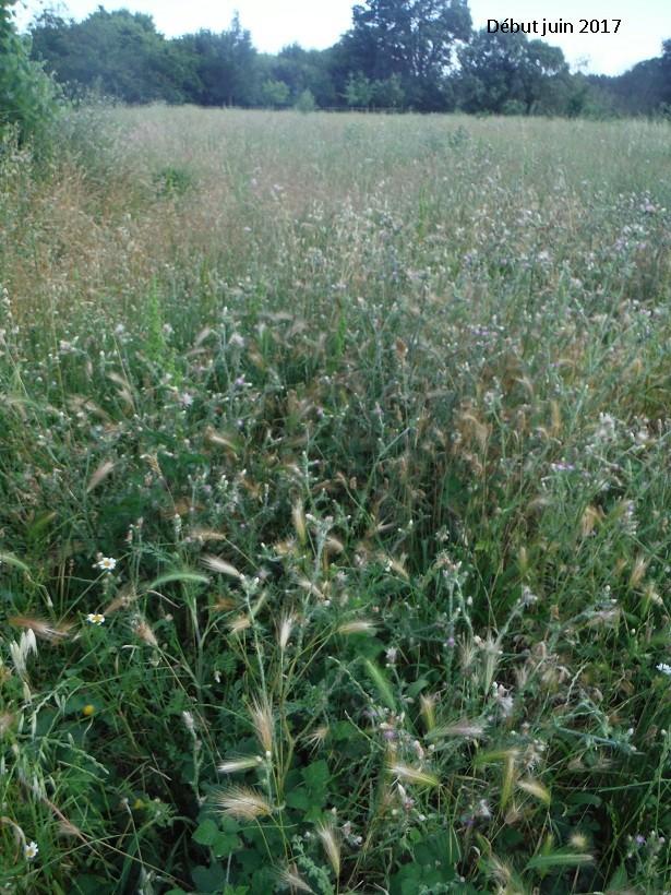 JdB de 4 hectares de pâtures dans le SUD : Avril 2019, et toujours la sécheresse... - Page 5 Dscf8310