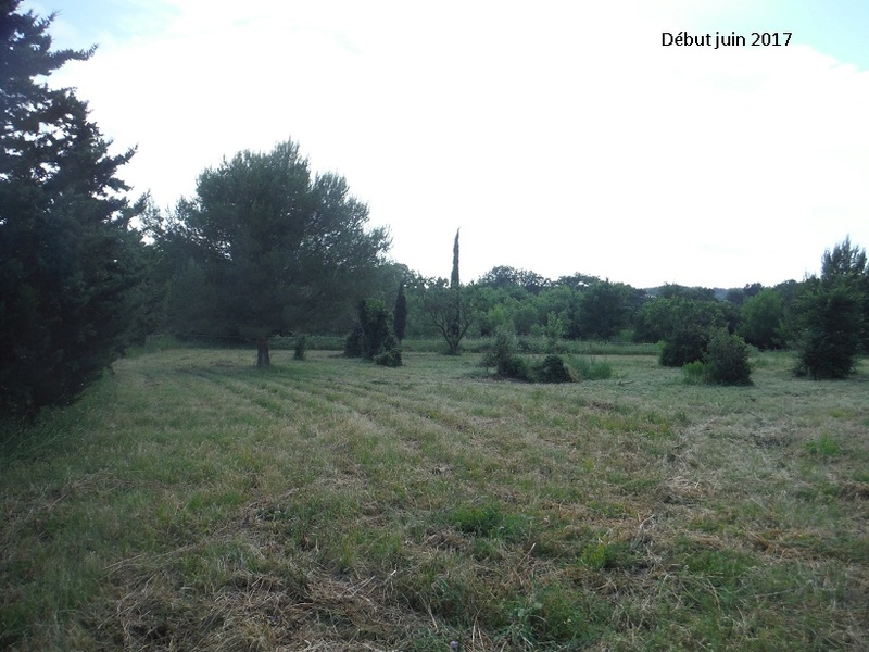 JdB de 4 hectares de pâtures dans le SUD : Avril 2019, et toujours la sécheresse... - Page 5 Dscf8312