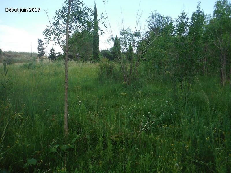 JdB de 4 hectares de pâtures dans le SUD : Avril 2019, et toujours la sécheresse... - Page 5 Dscf8313