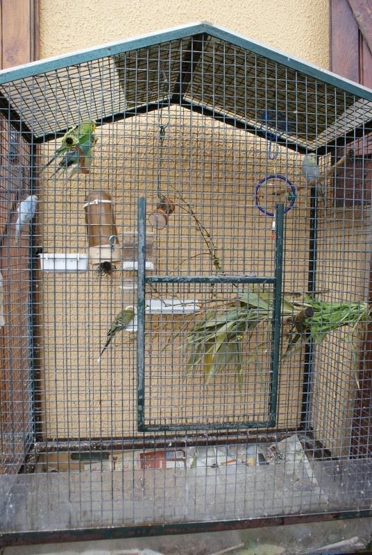 La cage de ma troupe Dsc06010