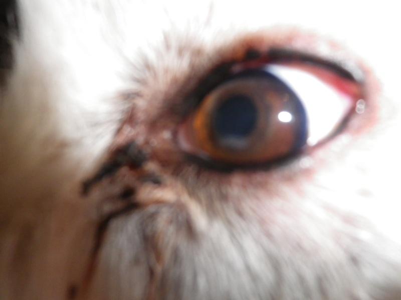 taches blanches dans les yeux Imgp0010