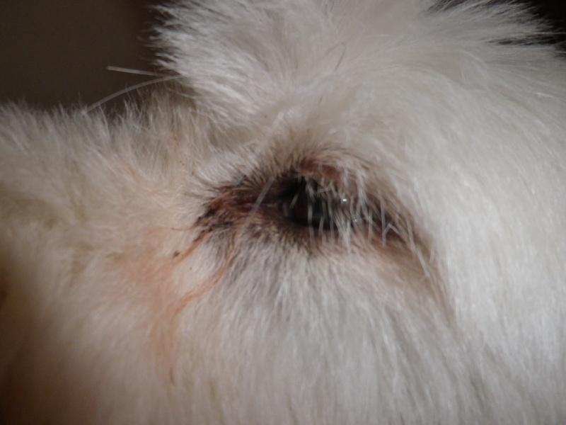 taches blanches dans les yeux Imgp0011