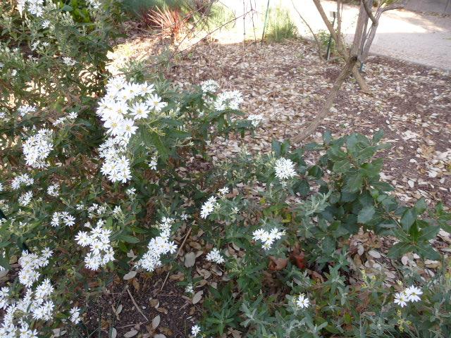 Quelques floraisons du jardin des  serres d'Auteuil  P1060516