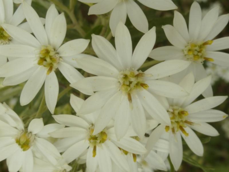 Quelques floraisons du jardin des  serres d'Auteuil  P1060517
