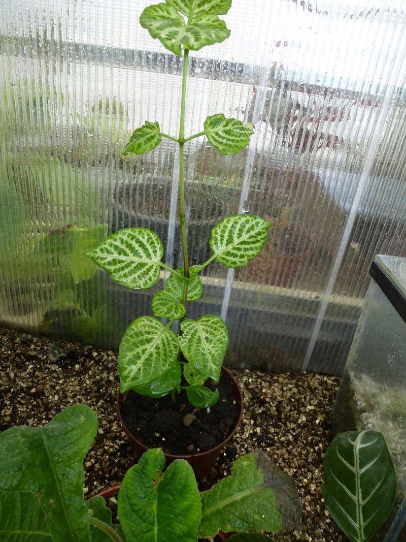 Plante  sans nom  P1240712