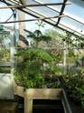 J'ai une nouvelle plante. Araucaria  - Page 2 P1050323
