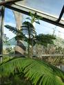 J'ai une nouvelle plante. Araucaria  - Page 2 P1050324