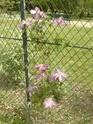 2eme série de floraisons  du jardin des  serres d'Auteuil  P1060630