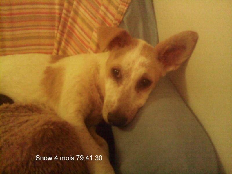 SNow 4 mois  13905210