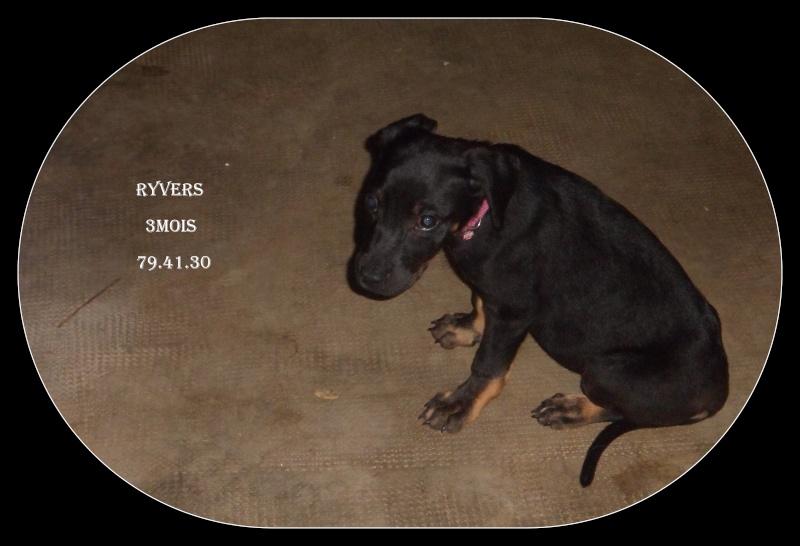 Ryvers 3 mois Ryvers10