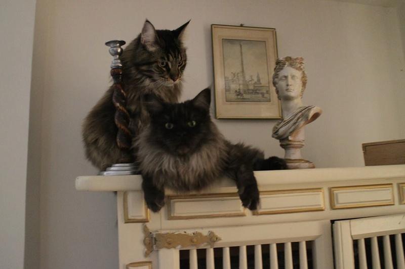 pour les amoureux des chats 13438910