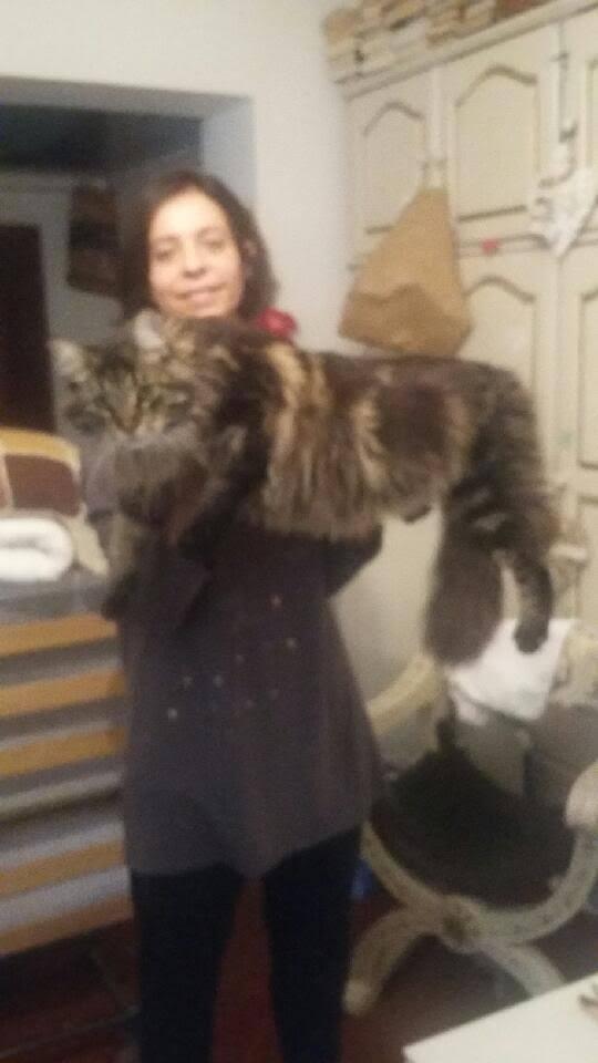 pour les amoureux des chats 14900310