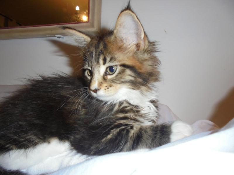 pour les amoureux des chats Dsc00610