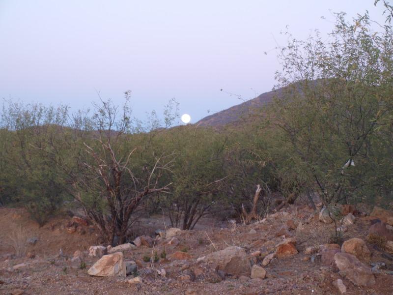Busqueda de pepitas de oro en Sonora 2017 Ol105018