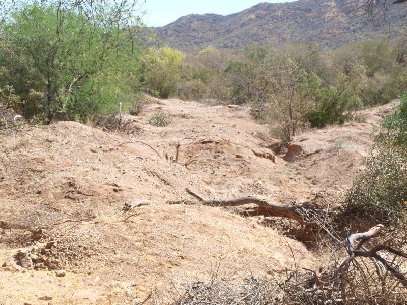 Busqueda de pepitas de oro en Sonora 2017 Ol175111