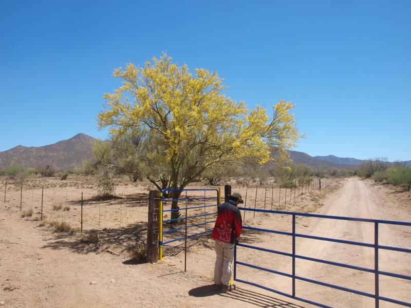 Busqueda de pepitas de oro en Sonora 2017 Ol205111