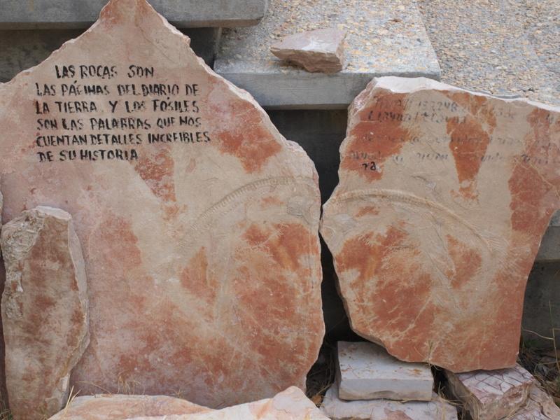 Dos prospecciones a la vez: fósiles y monedas Ol250712